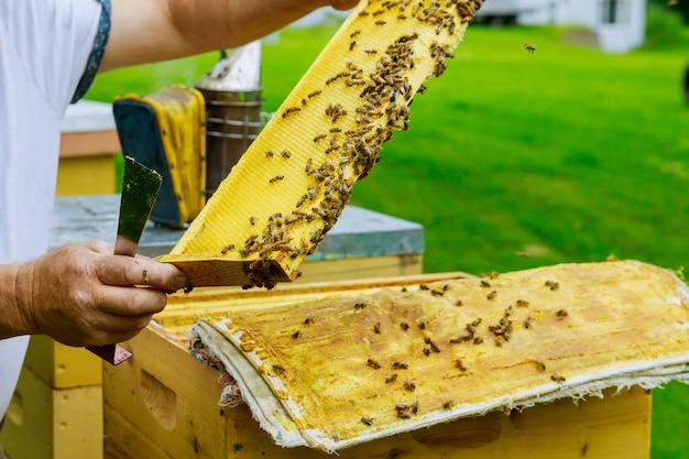 L'apicoltore controlla la colonia di api vicino all'alveare in volo in una bella giornata di sole