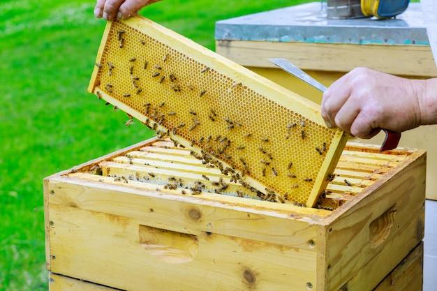 L'apicoltore lavora su estrae cornici con nido d'ape per il controllo del riempimento con miele