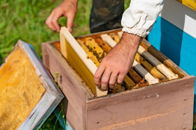 L'apicoltore mette una cornice con favi in un alveare per le api nel giardino in estate.