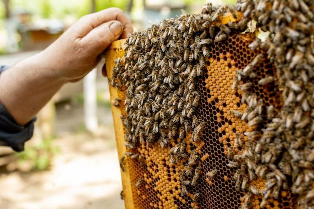 L'apicoltore si prende cura dei favi. l'apicoltore mostra un favo vuoto. l'apicoltore si prende cura delle api e dei favi. favi vuoti delle api.