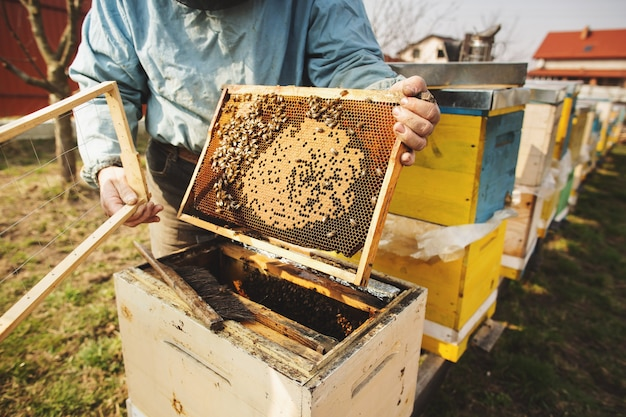 L'apicoltore sta lavorando con api e alveari sull'apiario