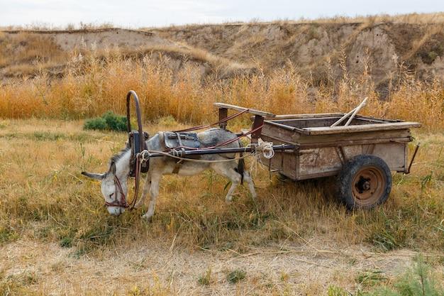 L'asino imbrigliato su un carro di ferro si erge sulle rive di un fiume e mangia erba