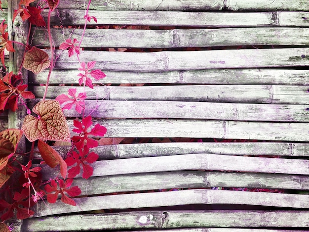 L'edera rosa che ondeggia su vecchio legno di bambù scuro del pavimento rustico della casa ha spazio della copia per fondo