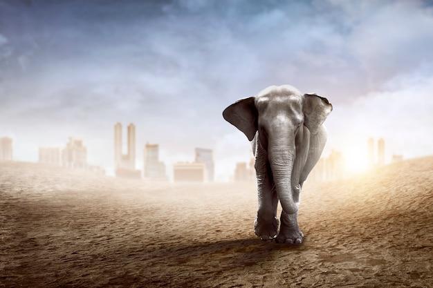 L'elefante di sumatra cammina sul deserto