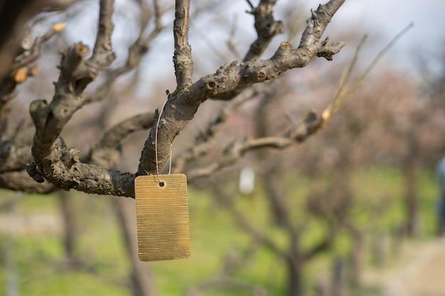 L'etichetta d'oro è appesa al ramo di un albero in giardino.