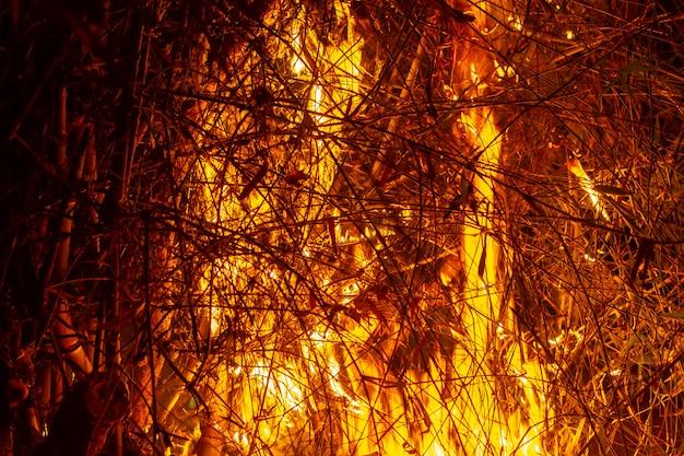 L'immagine dei registri nel fuoco ardente. fiamma del fuoco ardente.