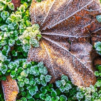 L'inverno sta arrivando. il primo gelo. cristalli di brina sulle piante