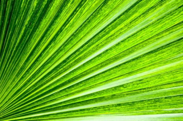 L'ombra verde della palma lascia la superficie della struttura