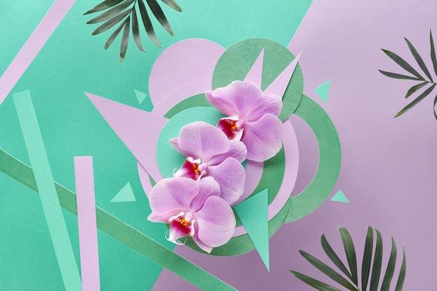 L'orchidea fiorisce su geometrico con copia-spazio, carta foral nel colore rosa e menta