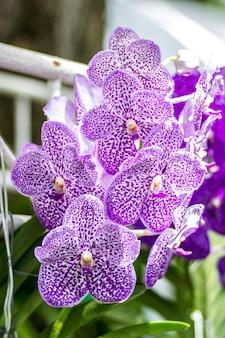 L'orchidea fiorisce un bel colore