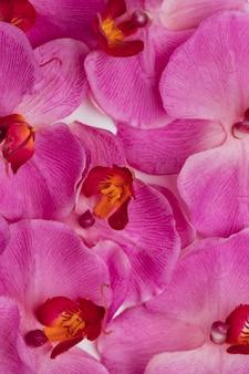 L'orchidea viola fiorisce la priorità bassa