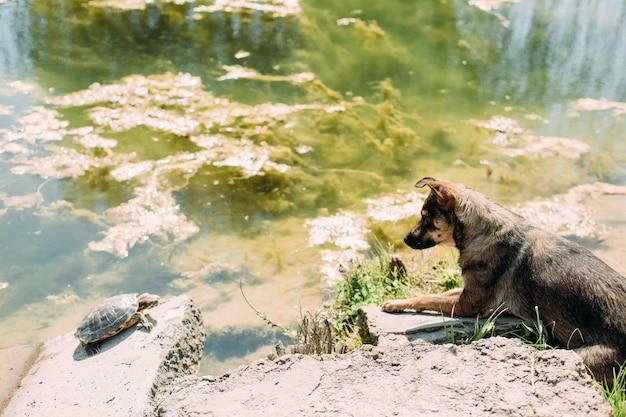 L'osservazione del cane gioca con animali di pietra d'acqua tartaruga