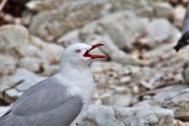 L'uccello a kaikoura, nuova zelanda