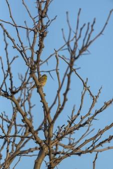 L'uccello comune si è appollaiato sui rami di un albero