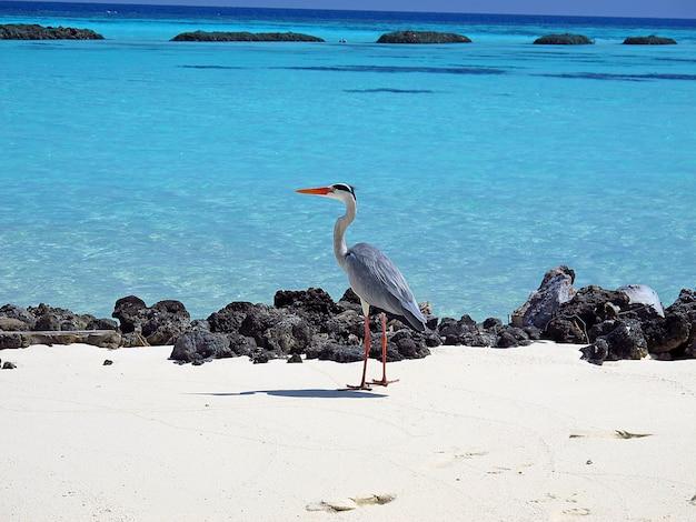 L'uccello su una spiaggia sabbiosa