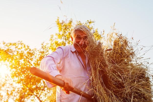 L'uomo felice dell'agricoltore raccoglie il fieno con la forca al tramonto in campagna
