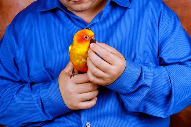 L'uomo si diverte a giocare con pappagallo in casa piace tenere pappagalli colorati