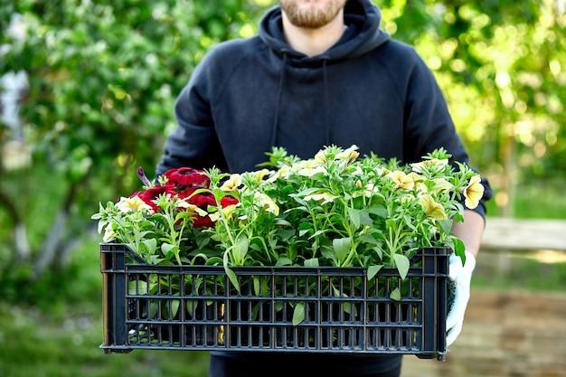 L'uomo sta acquistando i fiori della petunia nel canestro di trasporto del garden center.