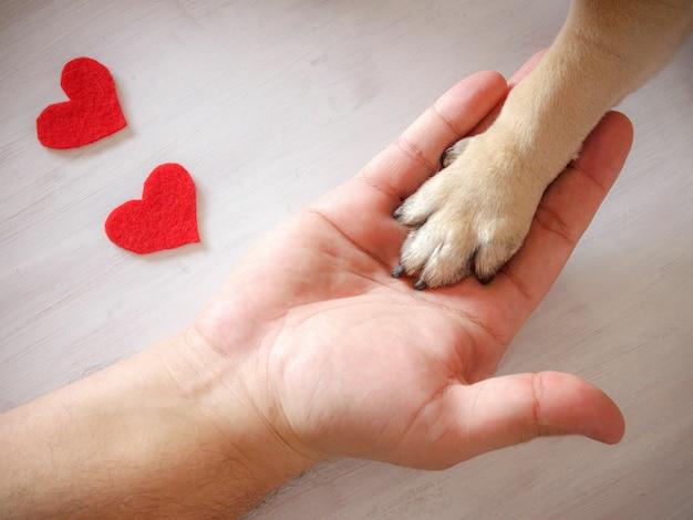 L'uomo tiene la zampa del cane con amore. cuori rossi su sfondo bianco