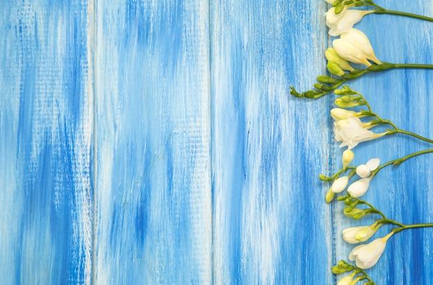 La bella molla della fresia fiorisce su un fondo di legno blu