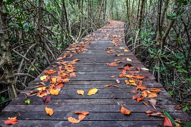 La bella passeggiata nella foresta