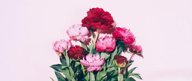 La bella peonia rosa fiorisce con ombra dura su fondo pastello
