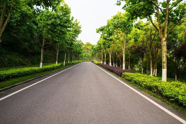 La bella strada è circondata dal verde
