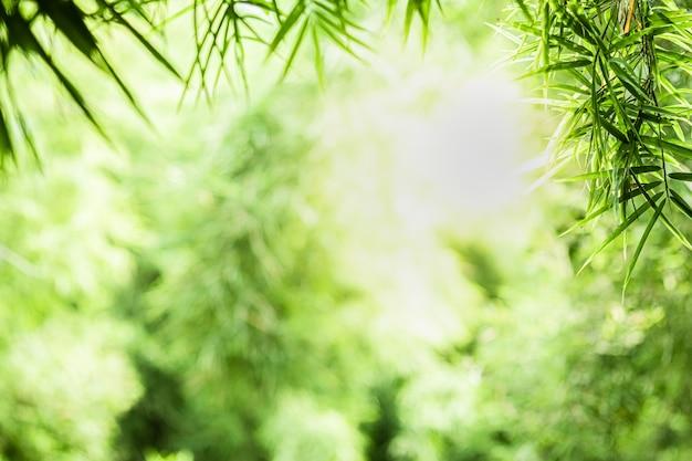 La bella vista del primo piano della foglia di bambù verde della natura su pianta ha offuscato il fondo con lo spazio della copia e di luce solare