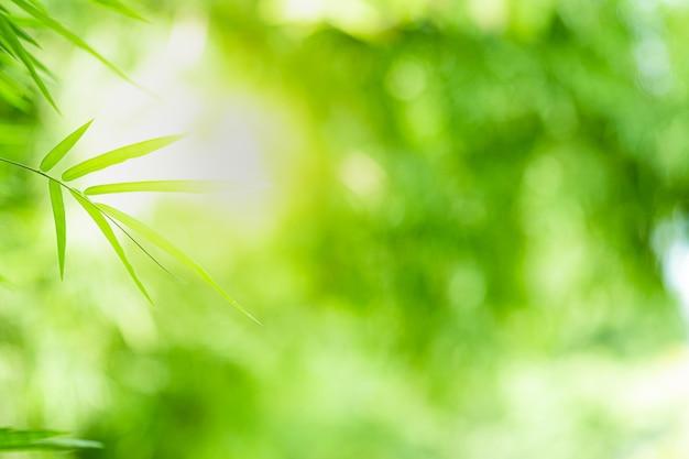 La bella vista del primo piano della foglia di bambù verde della natura su pianta ha offuscato il fondo con lo spazio della copia e di luce solare.