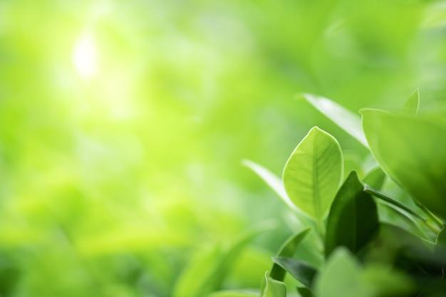 La bella vista del primo piano della foglia verde della natura su pianta ha offuscato il fondo con luce solare