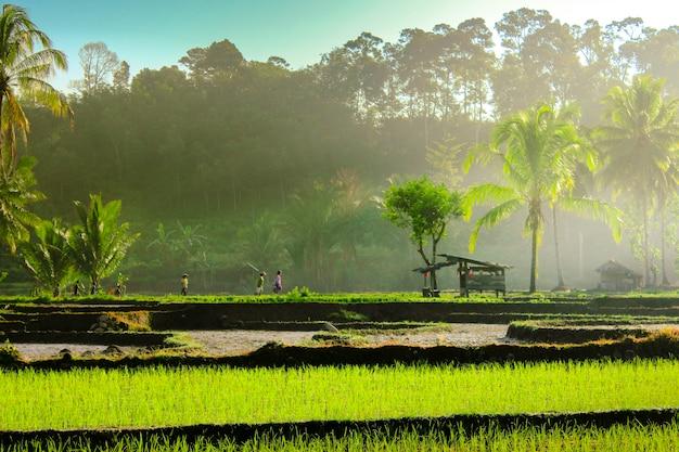 La bellezza naturale dell'indonesia con nuvole aeree incredibili