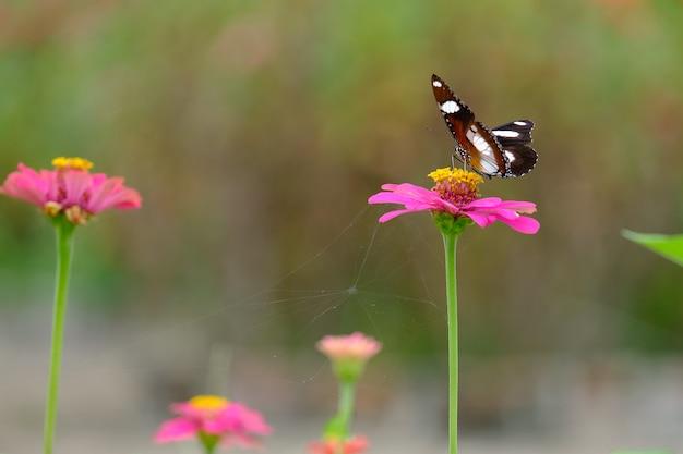 La bellissima farfalla sui fiori in giardino.
