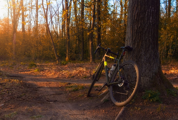 La bici della ghiaia si leva in piedi vicino ad un albero in una bella foresta al tramonto.