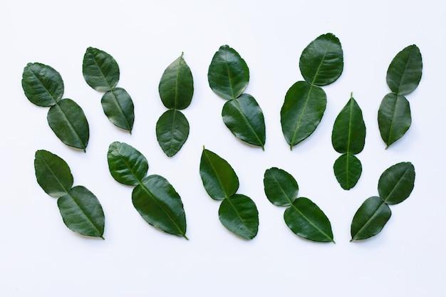 La calce del kaffir del bergamotto lascia l'ingrediente fresco dell'erba isolato su bianco