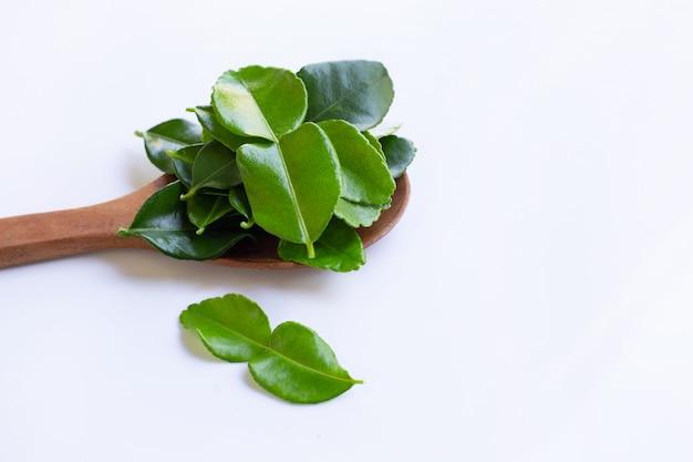 La calce del kaffir del bergamotto lascia l'ingrediente fresco dell'erba isolato su fondo bianco.