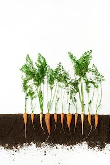 La carota cresce nel terreno, sezione trasversale, collage di ritaglio. pianta vegetale sana con foglie isolate. agricoltura, botanica e concetto di agricoltura