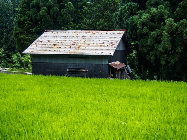 La casa di gassho-zukuri, il villaggio storico di shirakawa, va d'estate, in giappone