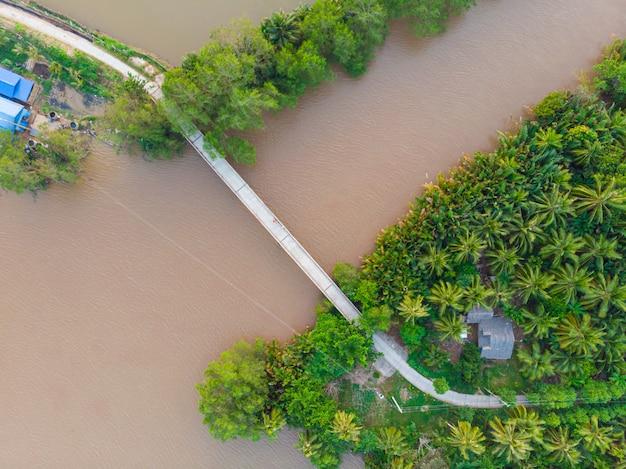 La cima aerea giù osserva il ponte sopra il canale fangoso dell'acqua nella regione del delta del mekong, ben tre, vietnam del sud. plantantion verde fertile del cocco delle isole tropicali.