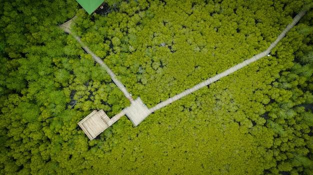 La cinghia del tong del mangroves delle mangrovie o il giacimento dorato della mangrovia all'estuario pra sae, rayong, tailandia