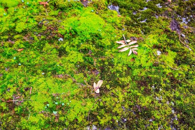 La consistenza del muschio verde sulle pietre