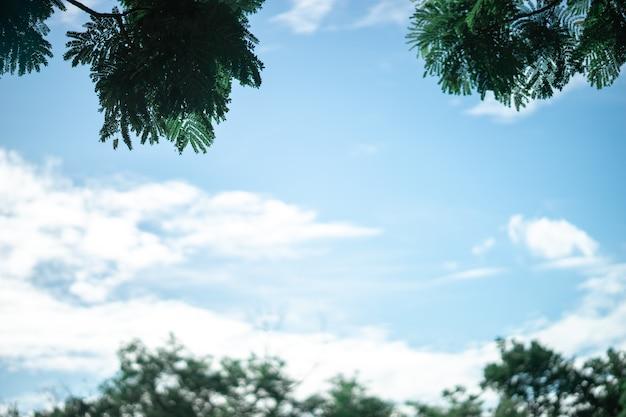 La cornice naturale con rami verdi e cielo blu in giardino.