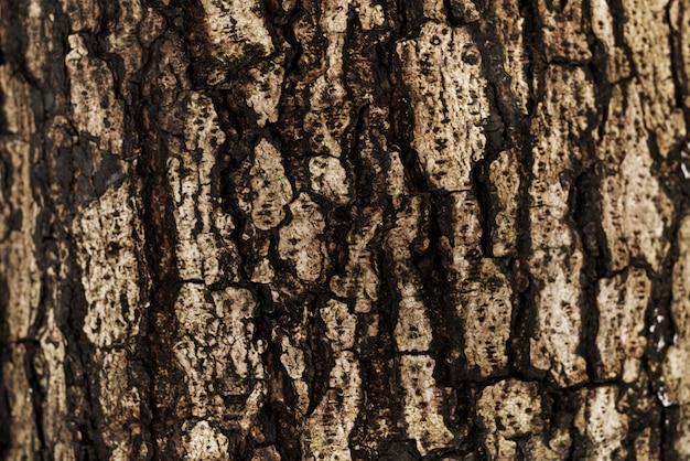 La corteccia di un albero sullo sfondo