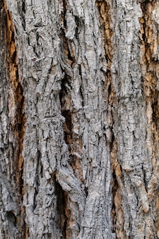 La corteccia di un vecchio albero. sfondo, trama.