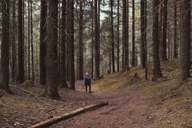 La donna cammina tra enormi alberi in un bosco di abeti rossi in autunno