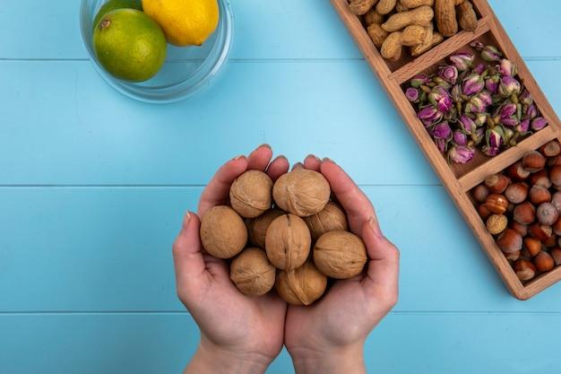 La donna di vista superiore tiene nelle sue mani le noci con nocciole e arachidi con limone e lime su un tavolo blu
