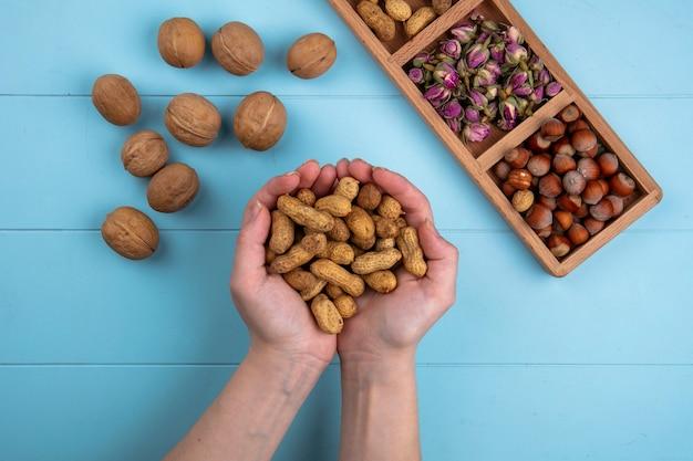 La donna di vista superiore tiene nelle sue mani le noci con nocciole e arachidi su un tavolo blu