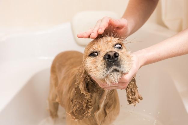 La donna lava la schiuma da un cane
