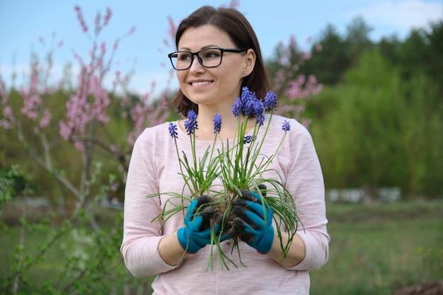 La donna matura nel giardino di primavera con i guanti pianta il giacinto blu del topo dei fiori