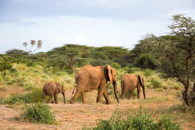 La famiglia degli elefanti cammina nella savana