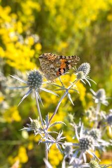 La farfalla raccoglie il nettare su un fiore del campo.